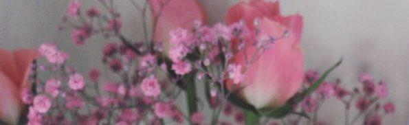 cropped-img_7100.jpg